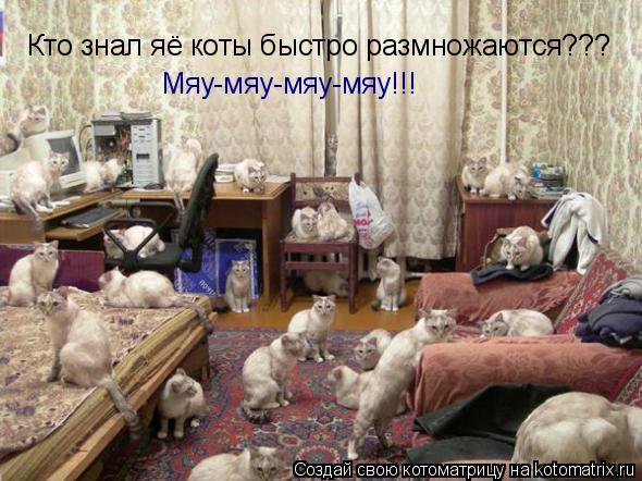 Котоматрица: Кто знал яё коты быстро размножаются??? Мяу-мяу-мяу-мяу!!!