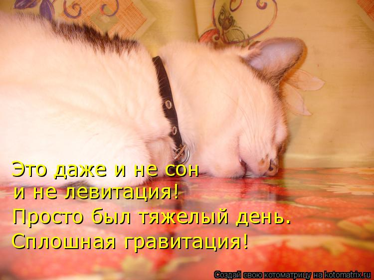 Котоматрица: Это даже и не сон и не левитация! Просто был тяжелый день. Сплошная гравитация!