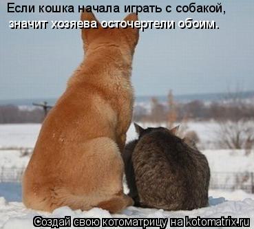 Котоматрица: Если кошка начала играть с собакой,  значит хозяева осточертели обоим.