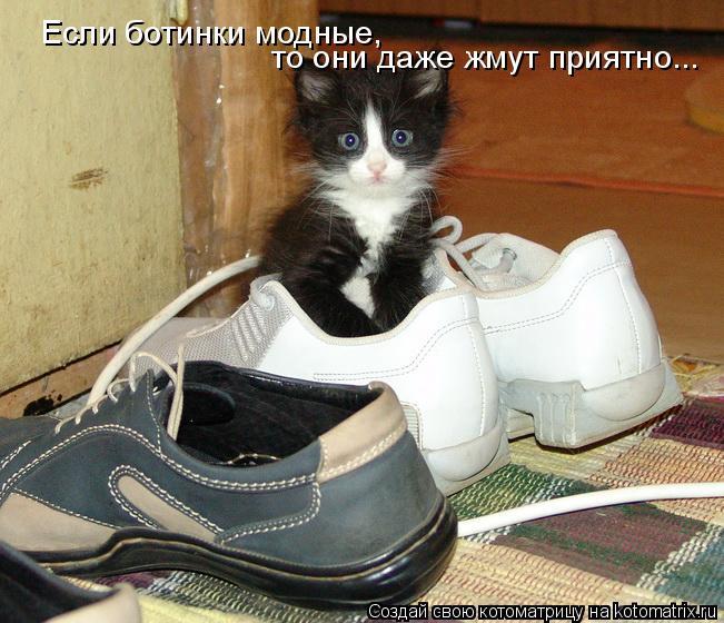 Котоматрица: Если ботинки модные,  то они даже жмут приятно...