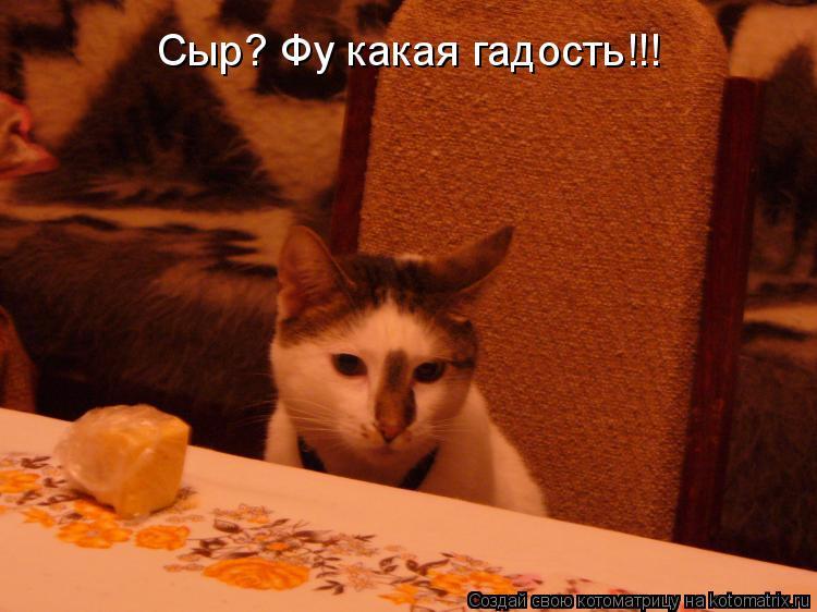 Котоматрица: Сыр? Фу какая гадость!!!