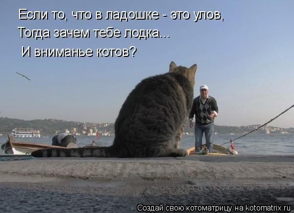 Котоматрица: Если то, что в ладошке - это улов, Тогда зачем тебе лодка... И вниманье котов?
