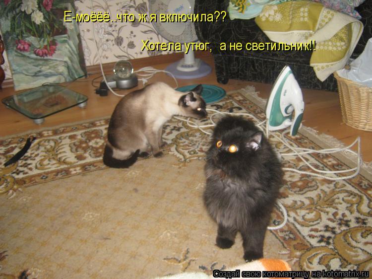 Котоматрица: Е-моёёё..что ж я включила??Хотела утюг,получила светильник!!! Е-моёёё..что ж я включила?? Хотела утюг,  а не светильник!!