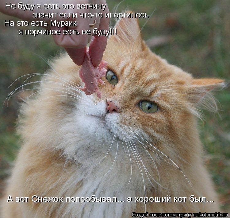 Котоматрица: Не буду я есть это ветчину значит если что-то ипортилось  На это есть Мурзик я порчиное есть не буду!!! А вот Снежок попробывал... а хороший кот