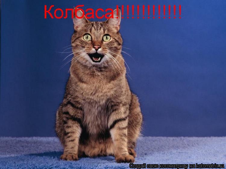 Котоматрица: Колбаса!!!!!!!!!!!!!