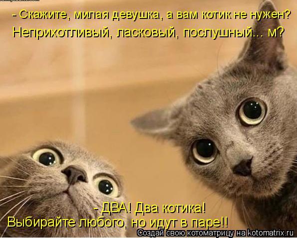 Котоматрица: - Скажите, милая девушка, а вам котик не нужен? Неприхотливый, ласковый, послушный... м? - ДВА! Два котика! Выбирайте любого, но идут в паре!!