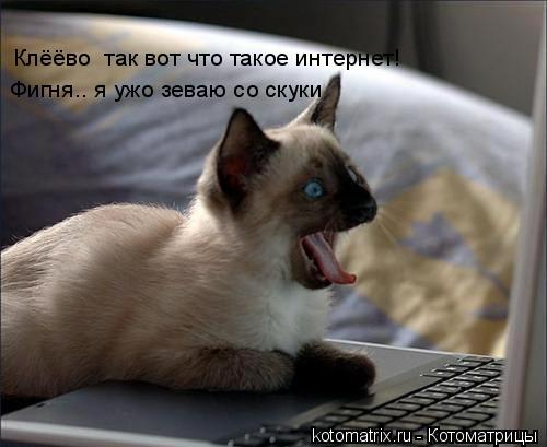 Котоматрица: Клёёво  так вот что такое интернет! Фигня.. я ужо зеваю со скуки