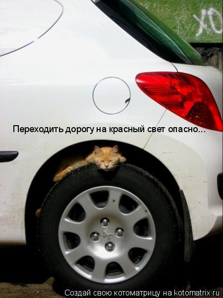 Котоматрица: Переходить дорогу на красный свет опасно...