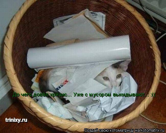 Котоматрица: До чего довёл кризис... Уже с мусором выкидывают... :((