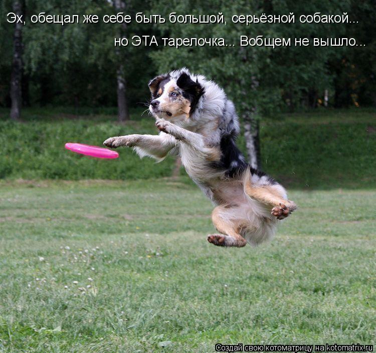 Котоматрица: Эх, обещал же себе быть большой, серьёзной собакой... но ЭТА тарелочка... Вобщем не вышло...