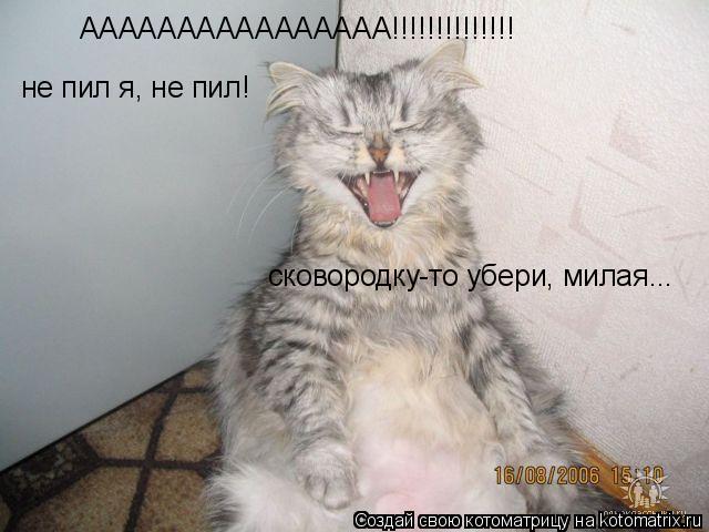 Котоматрица: АААААААААААААААА!!!!!!!!!!!!!! не пил я, не пил!  сковородку-то убери, милая...