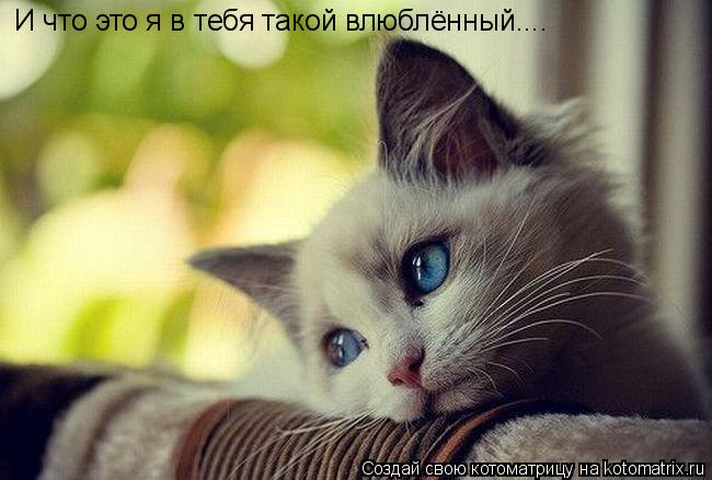 Котоматрица: И что это я в тебя такой влюблённый....
