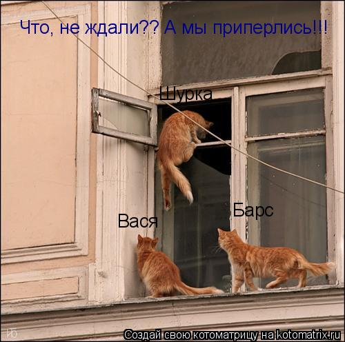Котоматрица: Вася Барс Шурка Что, не ждали?? А мы приперлись!!!