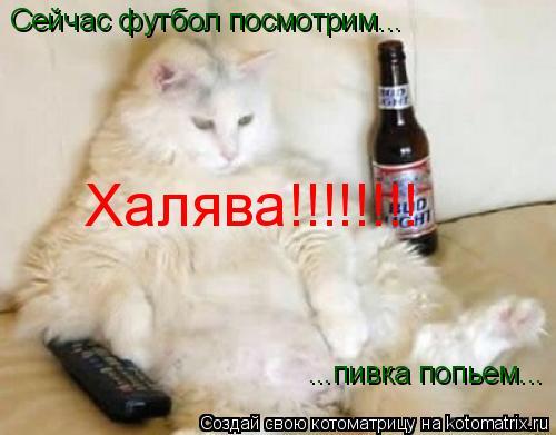 Котоматрица: Сейчас футбол посмотрим... ...пивка попьем... Халява!!!!!!!!
