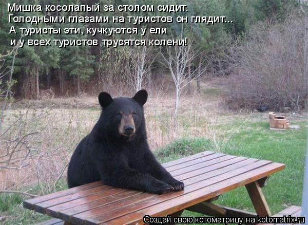 Котоматрица: Мишка косолапый за столом сидит.  Голодными глазами на туристов он глядит... А туристы эти, кучкуются у ели и у всех туристов трусятся колени!