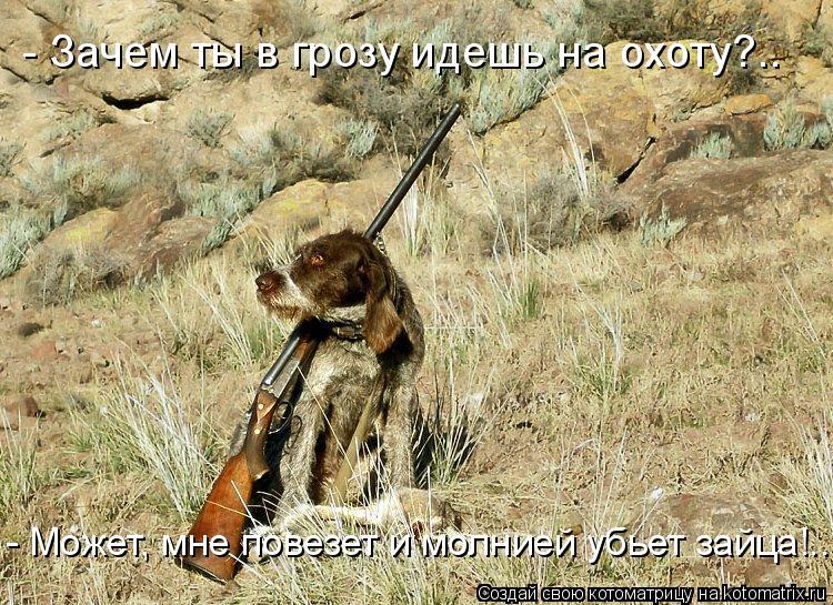 Котоматрица: - Зачем ты в грозу идешь на охоту?.. - Может, мне повезет и молнией убьет зайца!..