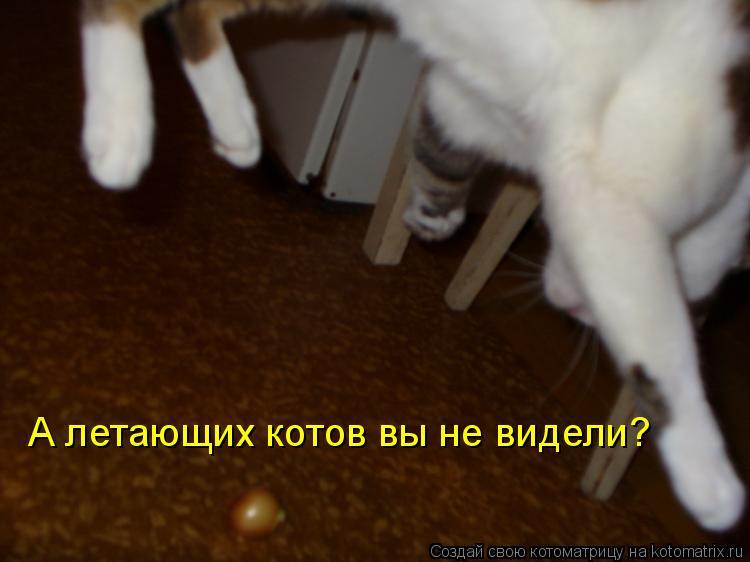 Котоматрица: А летающих котов вы не видели?