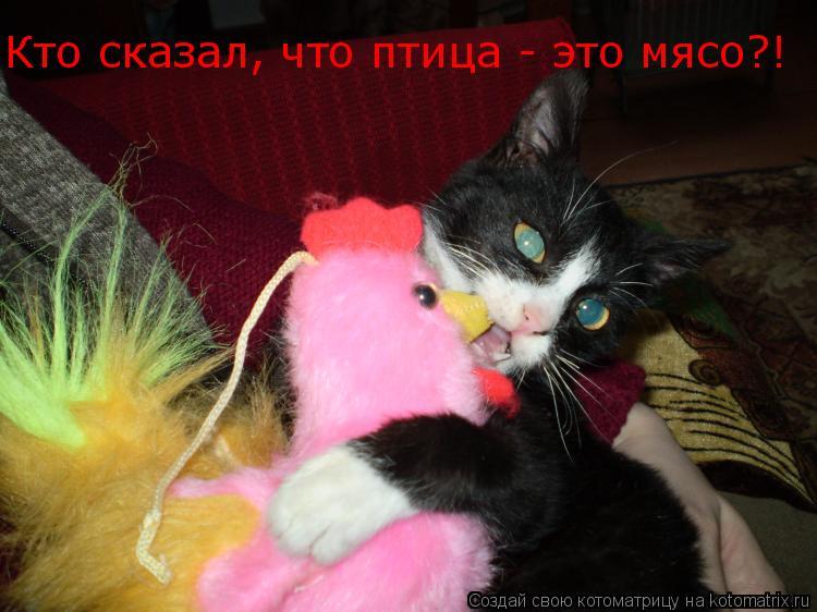 Котоматрица: Кто сказал, что птица - это мясо?!