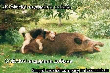 Котоматрица: ДОБЫЧА!-подумала собака, СОБАКА!-подумала добыча
