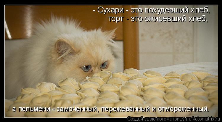 Котоматрица: - Сухари - это похудевший хлеб, торт - это ожиревший хлеб, а пельмени - замоченный, пережеванный и отмороженный.