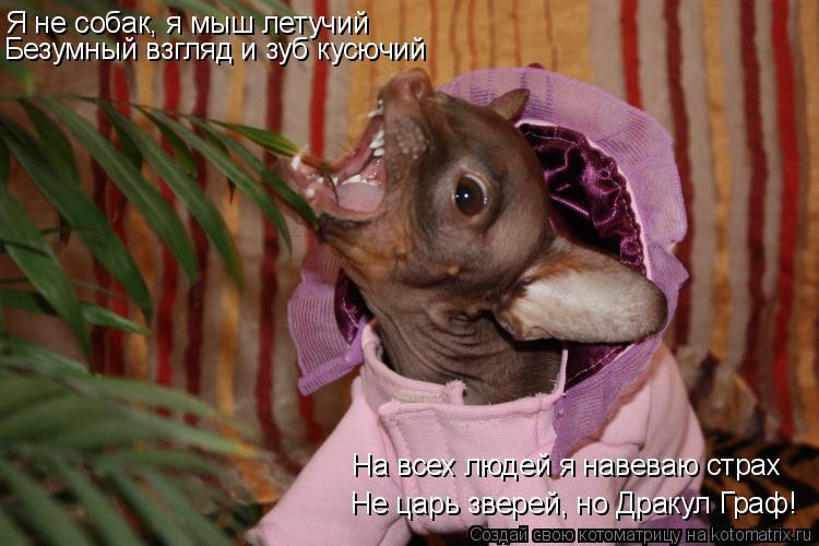 Котоматрица: Я не собак, я мыш летучий Безумный взгляд и зуб кусючий Не царь зверей, но Дракул Граф! На всех людей я навеваю страх