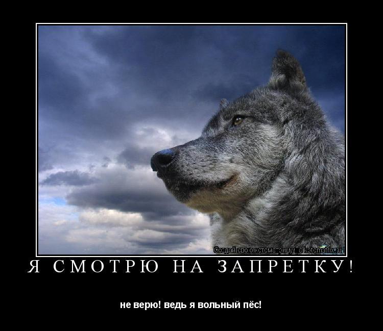Котоматрица: Я смотрю на запретку! не верю! ведь я вольный пёс!