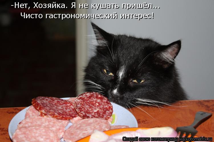 Котоматрица: -Нет, Хозяйка. Я не кушать пришёл... Чисто гастрономический интерес!