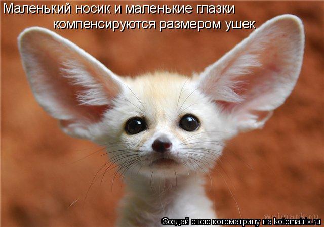 Котоматрица: Маленький носик и маленькие глазки  компенсируются размером ушек