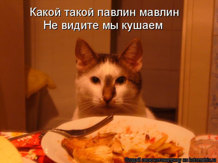 Котоматрица: Какой такой павлин мавлин  Не видите мы кушаем