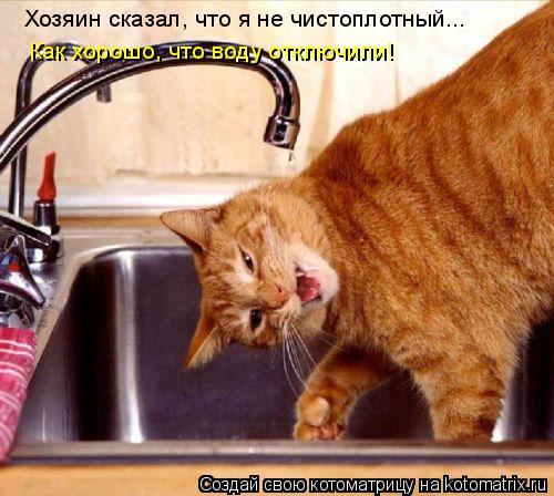 Котоматрица: Хозяин сказал, что я не чистоплотный... Как хорошо, что воду отключили!