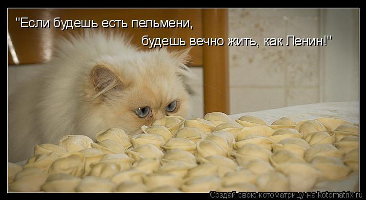 """Котоматрица: """"Если будешь есть пельмени, будешь вечно жить, как Ленин!"""""""