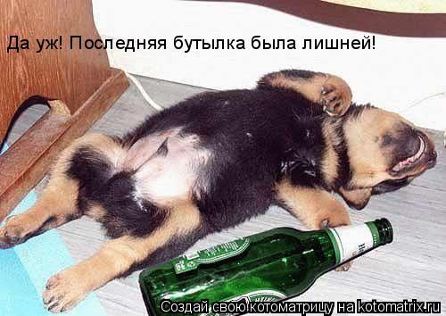 Котоматрица: Да уж! Последняя бутылка была лишней!