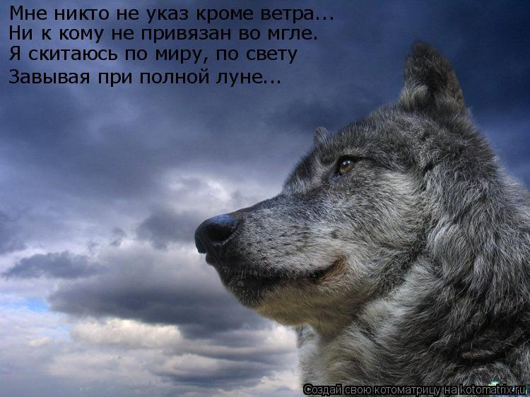 Котоматрица: Мне никто не указ кроме ветра... Ни к кому не привязан во мгле. Я скитаюсь по миру, по свету Завывая при полной луне...