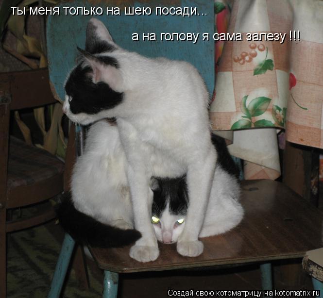 Котоматрица: ты меня только на шею посади...  а на голову я сама залезу !!!