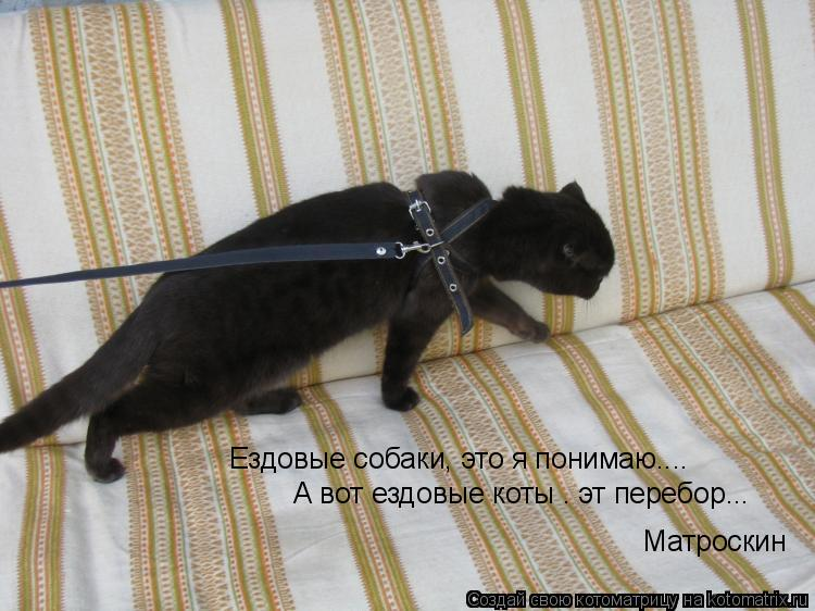 Котоматрица: Ездовые собаки, это я понимаю.... А вот ездовые коты — эт перебор...  © Матроскин