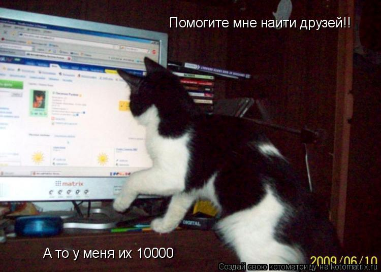 Котоматрица: Помогите мне наити друзей!! А то у меня их 10000