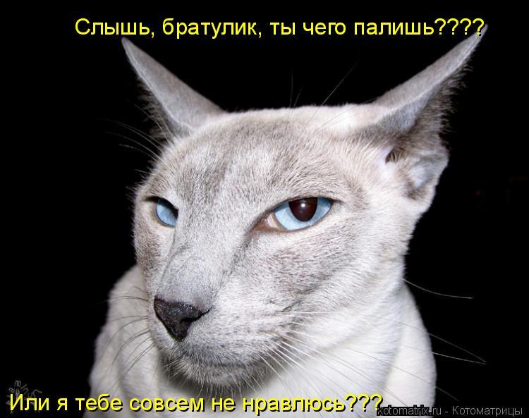 Котоматрица: Слышь, братулик, ты чего палишь???? Или я тебе совсем не нравлюсь???