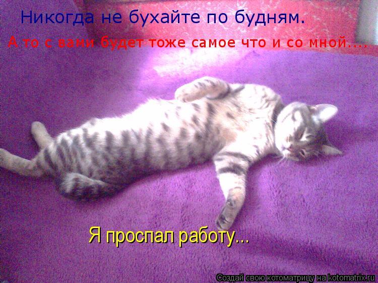 Котоматрица: Никогда не бухайте по будням. А то с вами будет тоже самое что и со мной.... Я проспал работу...