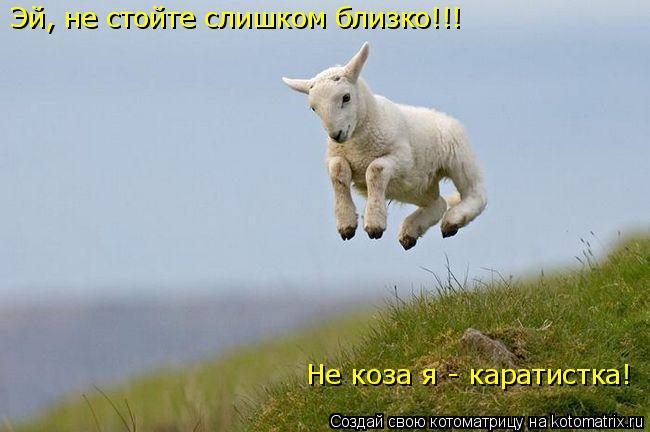 Котоматрица: Эй, не стойте слишком близко!!! Не коза я - каратистка!