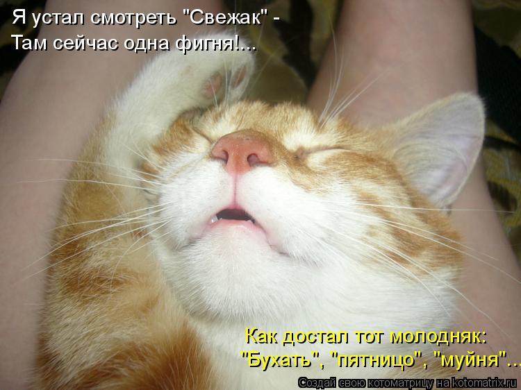 """Котоматрица: Я устал смотреть """"Свежак"""" - Там сейчас одна фигня!... """"Бухать"""", """"пятницо"""", """"муйня""""... Как достал тот молодняк:"""