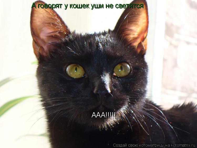 Котоматрица: А говорят у кошек уши не светятся ААА!!!!!