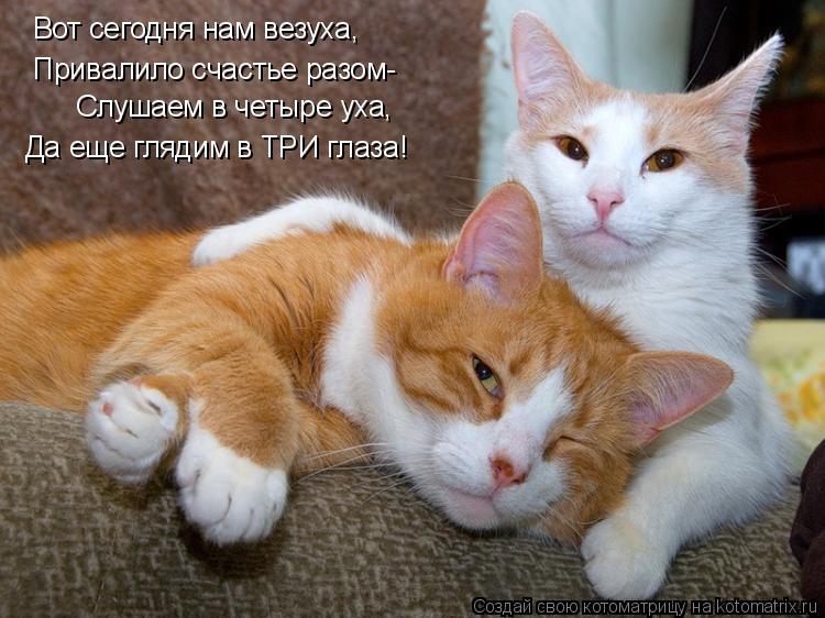 Котоматрица: Вот сегодня нам везуха, Привалило счастье разом- Слушаем в четыре уха, Да еще глядим в ТРИ глаза!