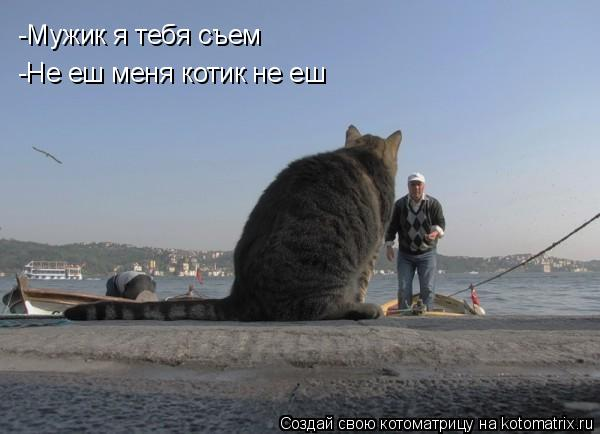 Котоматрица: -Мужик я тебя съем -Не еш меня котик не еш