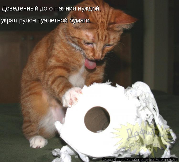 Котоматрица: Доведенный до отчаяния нуждой, украл рулон туалетной бумаги.