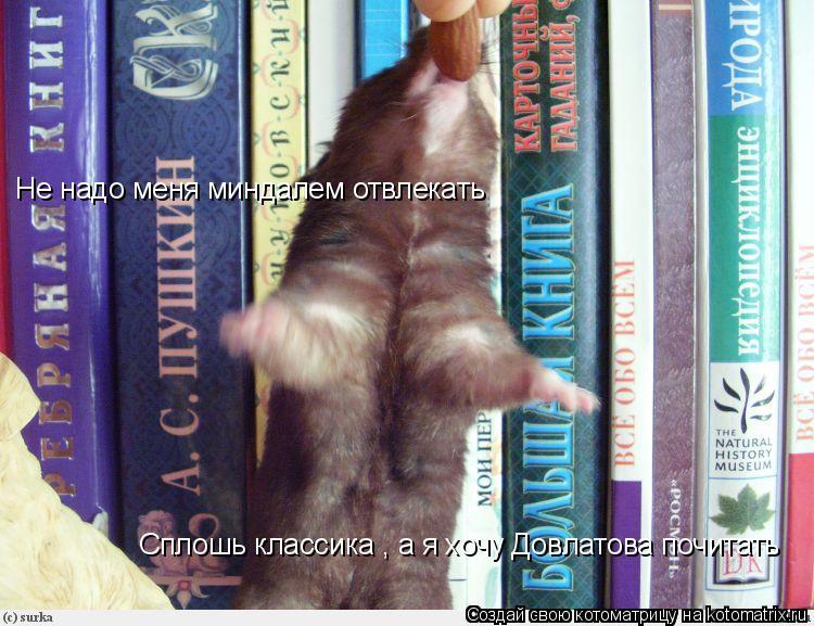 Котоматрица: Не надо меня миндалем отвлекать  Сплошь классика , а я хочу Довлатова почитать