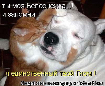 Котоматрица: ты моя Белоснежка ..! и запомни : я единственный твой Гном !