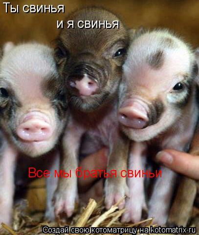 Котоматрица: Ты свинья и я свинья Все мы братья свиньи