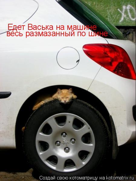 Котоматрица: Едет Васька на машине Едет Васька на машине весь размазанный по шине