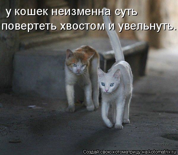 Котоматрица: у кошек нeизменна суть повертеть хвостом и увельнуть.