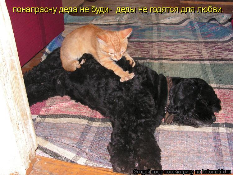 Котоматрица: понапрасну деда не буди-  деды не годятся для любви.